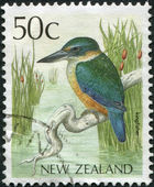 NEW ZEALAND - CIRCA 1988: Postage stamps printed in New Zealand, shows a bird Kingfisher, circa 1988 — Stock Photo