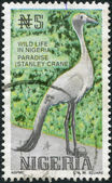 NIGERIA - CIRCA 1993: A stamp printed in Nigeria, shows Stanley Crane (Grus paradisea), circa 1993 — Stock Photo