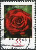 GERMANY - CIRCA 2008: A stamp printed in Germany, flower shows, garden roses, circa 2008 — Stock Photo
