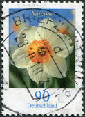 GERMANY - CIRCA 2006: A stamp printed in Germany, shows the flower of Narcissus, circa 2006 — Stock Photo