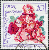 GDR - CIRCA 1972: A stamp printed in GDR, the international exhibition devoted to roses, depicts Bergers Rose iga Erfurt, circa 1972 — Foto Stock
