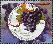 CROATIA - CIRCA 2010: A stamp printed in Croatia, is devoted to grapes, shows Vitis vinifera (Common Grape Vine), circa 2010 — Stock Photo