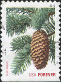 USA - CIRCA 2010: A stamp printed in USA, depicts Picea pungens, a series of Holiday Evergreens Forever, circa 2010 — Stock Photo