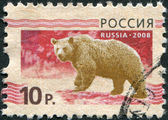 RUSSIA - CIRCA 2008: A stamp printed in Russia, shows a brown bear (Ursus arctos), circa 2008 — Stock Photo