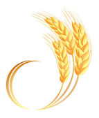 Wheat ears icon — Stock Vector