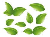Nature design element — Stock Vector