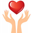 Red heart and hands — Stock Vector