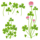 Set of clover leafs isolated on the white background. — Stock Vector