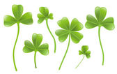Set of clover leafs isolated on the white background. — Vector de stock