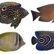 Stock Photo: Four Tropical Fishes isolated on white