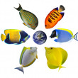 Six tropical fishes around the globe - Stock Photo