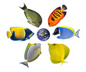 Six tropical fishes around the globe — Stock Photo