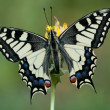 Stock Photo: Papilio machaon