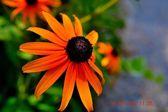 Sunshine Daydream — Stock Photo