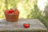 Rajče cherry na laně — Stock fotografie