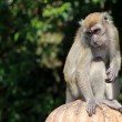 Monkey solitude - Stock Photo