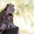 Monkey and child - Stock Photo