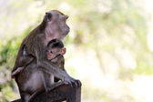 Monkey and child — Stock Photo
