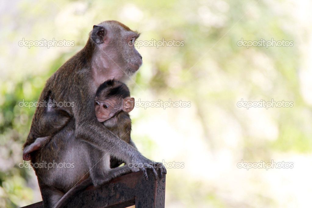 Monkey and its child hugging — Stock Photo #12231927