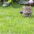 Young cat in the grass - Stock Photo