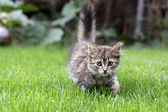 Young cat in the grass — Stock Photo