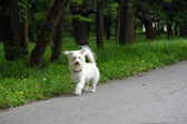 Small dog in the park — Stock Photo