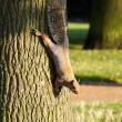 A cute Squirrel - Stockfoto