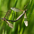 Bugs on a branch of grass - Stock Photo