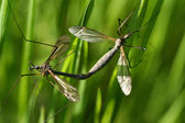 Bugs on a branch of grass — Stock Photo