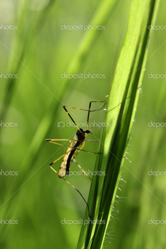 Bug on a branch of grass  — Stock Photo #11891754