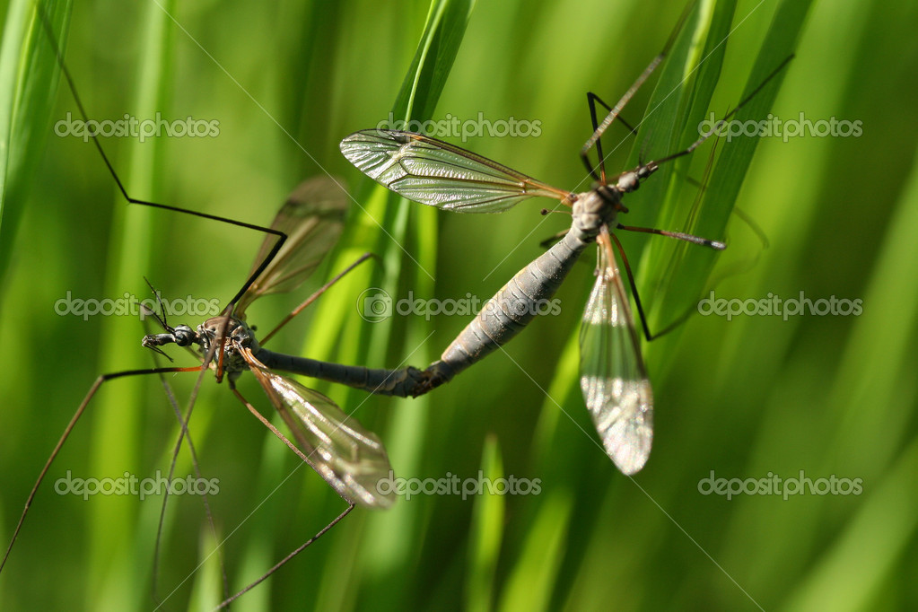 Bugs on a branch of grass  Stock Photo #11893096