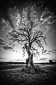 Alone dead tree on country highway in black and white. — Stock Photo