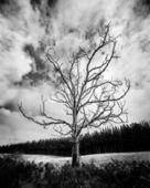 Un arbre mort au champ d'herbe verte avec nuage de pluie — Photo