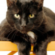 Black Cat Staring — Stock Photo #11889054