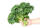 Mans hand holding a bunch of kale — Stock Photo