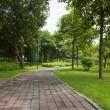 A trail in the park — Stock Photo #11995092