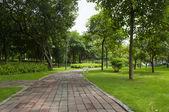 A trail in the park — 图库照片