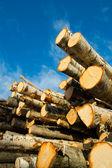 Birch logs under blue sky — Stock Photo