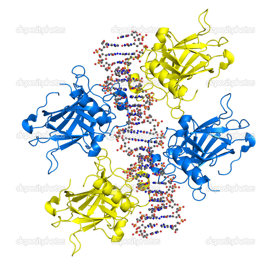 Ribbon model of p53 protein bound to DNA molecule. p53 (aka tumor protein 53) is a transcription factor whose inactivation can trigger the onset of cancer. — Photo #11877665