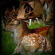 Stok fotoğraf: A deer is resting after a long day