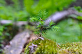 Little forest tree — Stock Photo