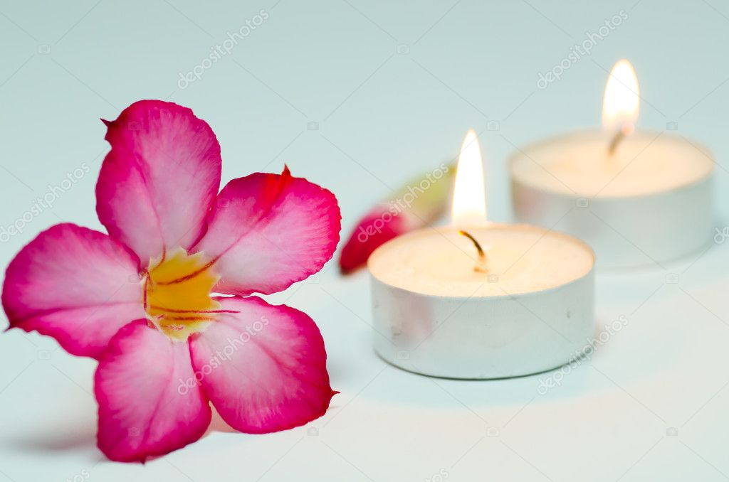 The frangipani is one of the most exotically fragrant of all plants that can be an alternative wellness treatment — Stock Photo #11883813