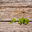 Green plants growing from wooden floor — Stock Photo