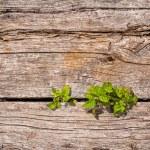 Green plants growing from wooden floor — Stock Photo