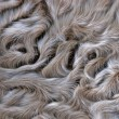 Stock Photo: Lamb fur background