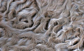 Lamb fur background — Stock Photo