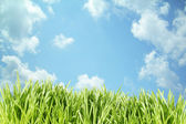 Grass on blue sky — Stock Photo