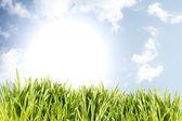 Grass on blue sky — Stock Photo