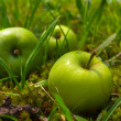 Stock Photo: Four green apples lying in garden in green grass