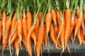 čerstvé zahradní mrkev — Stock fotografie